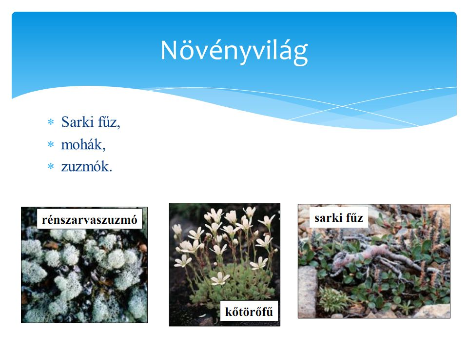  Sarki fűz,  mohák,  zuzmók. Növényvilág