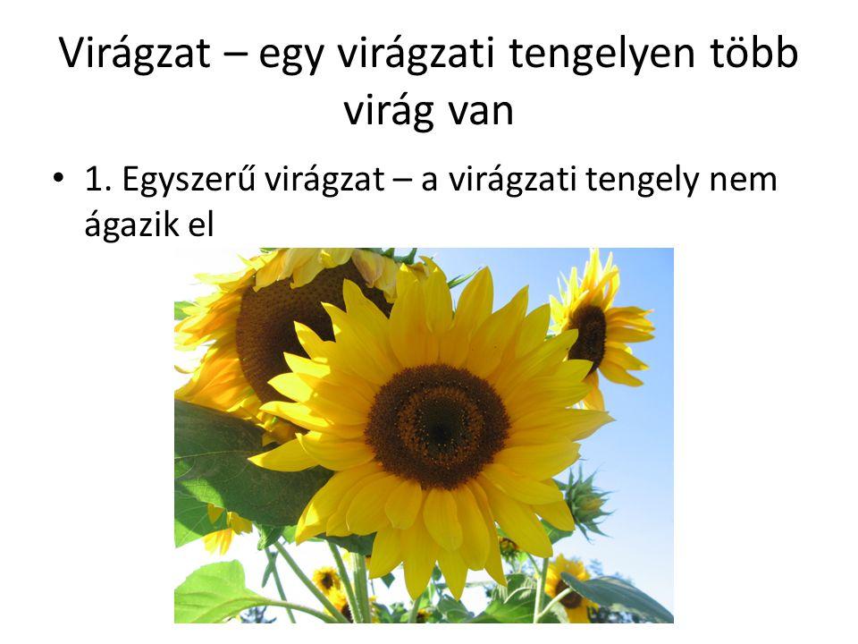 Virágzat – egy virágzati tengelyen több virág van 1.