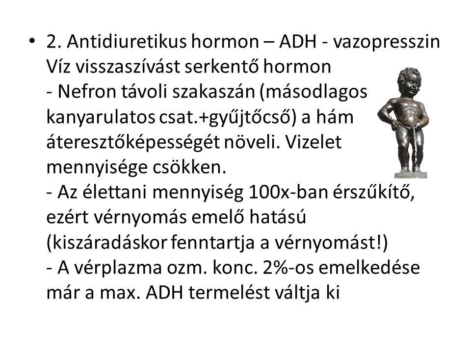 2. Antidiuretikus hormon – ADH - vazopresszin Víz visszaszívást serkentő hormon - Nefron távoli szakaszán (másodlagos kanyarulatos csat.+gyűjtőcső) a