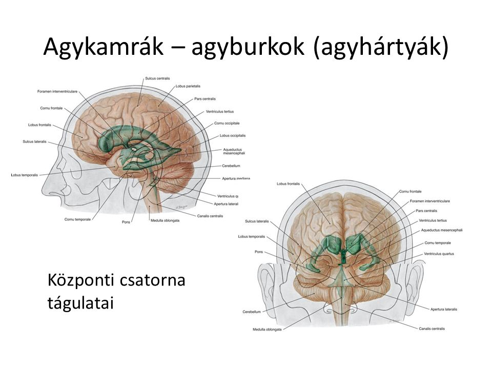 Agykamrák – agyburkok (agyhártyák) Központi csatorna tágulatai