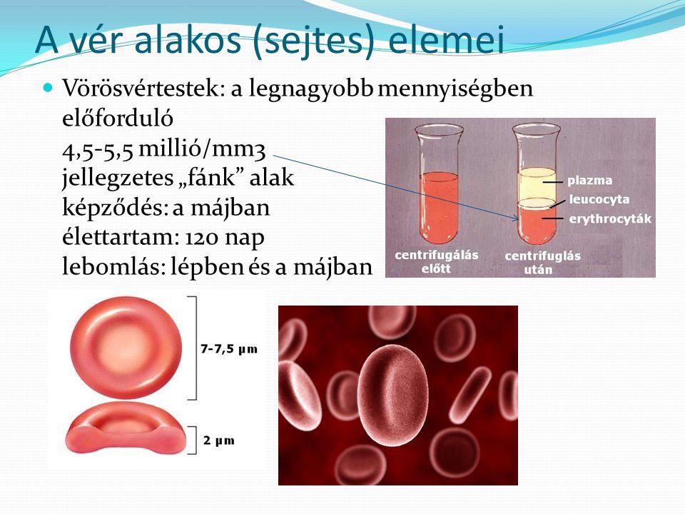 """A vér alakos (sejtes) elemei Vörösvértestek: a legnagyobb mennyiségben előforduló 4,5-5,5 millió/mm3 jellegzetes """"fánk"""" alak képződés: a májban életta"""