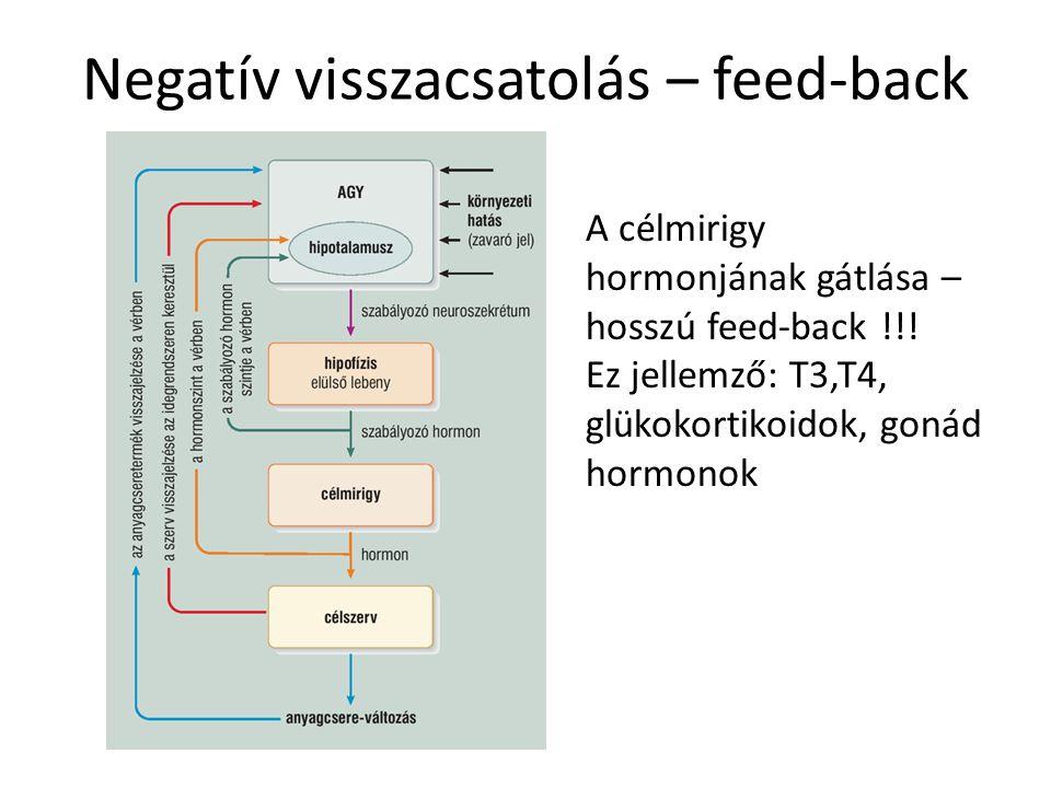 Negatív visszacsatolás – feed-back A célmirigy hormonjának gátlása – hosszú feed-back !!! Ez jellemző: T3,T4, glükokortikoidok, gonád hormonok
