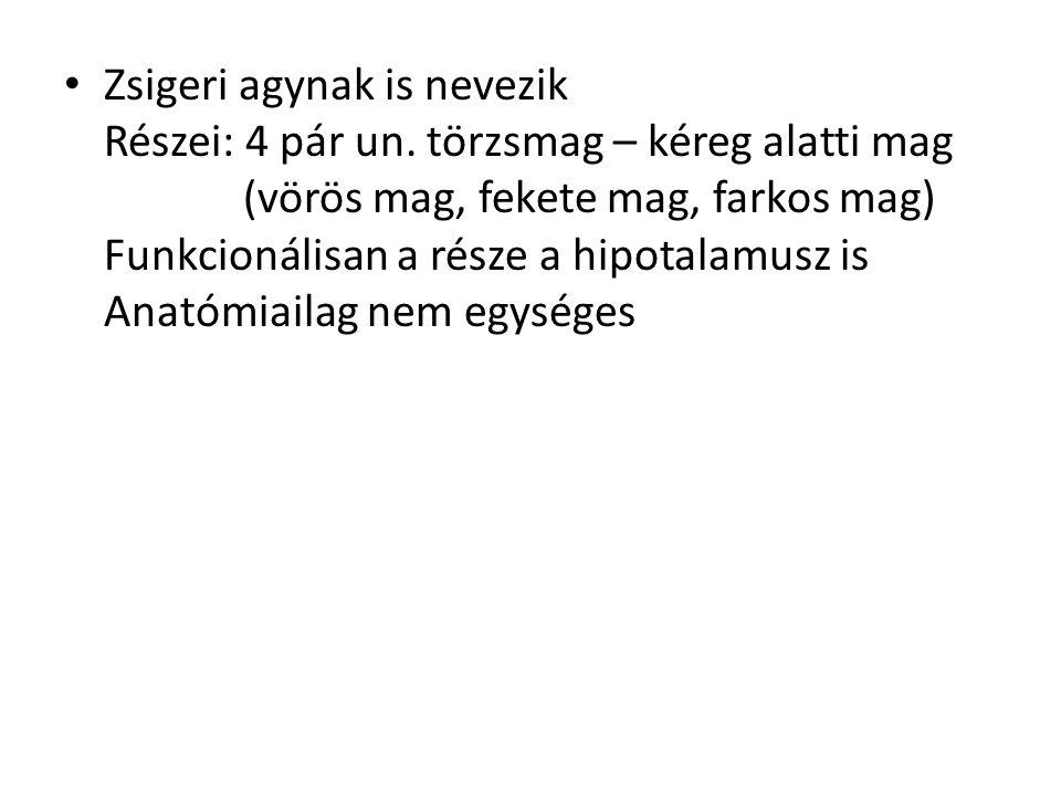 Zsigeri agynak is nevezik Részei: 4 pár un. törzsmag – kéreg alatti mag (vörös mag, fekete mag, farkos mag) Funkcionálisan a része a hipotalamusz is A