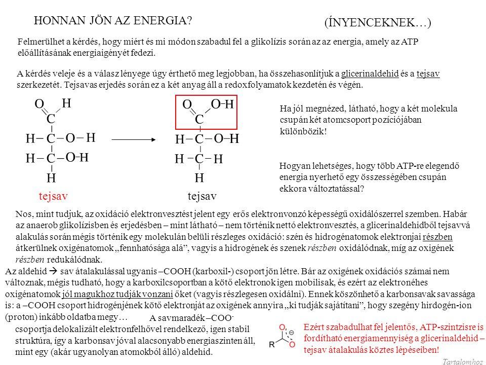 Felmerülhet a kérdés, hogy miért és mi módon szabadul fel a glikolízis során az az energia, amely az ATP előállításának energiaigényét fedezi. (ÍNYENC
