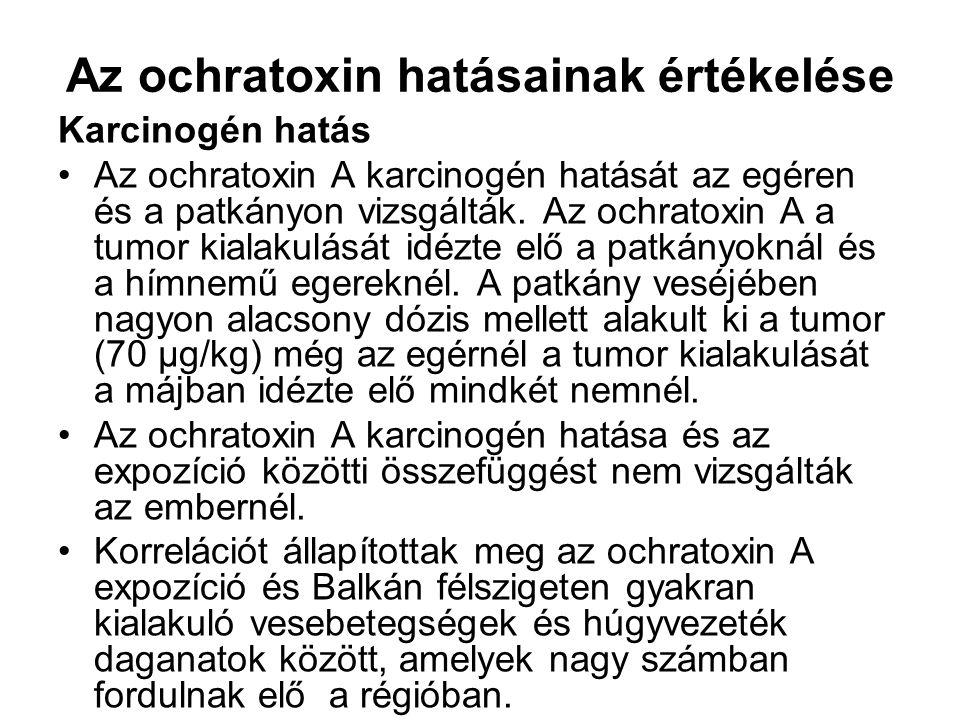 Az ochratoxin hatásainak értékelése Karcinogén hatás Az ochratoxin A karcinogén hatását az egéren és a patkányon vizsgálták.