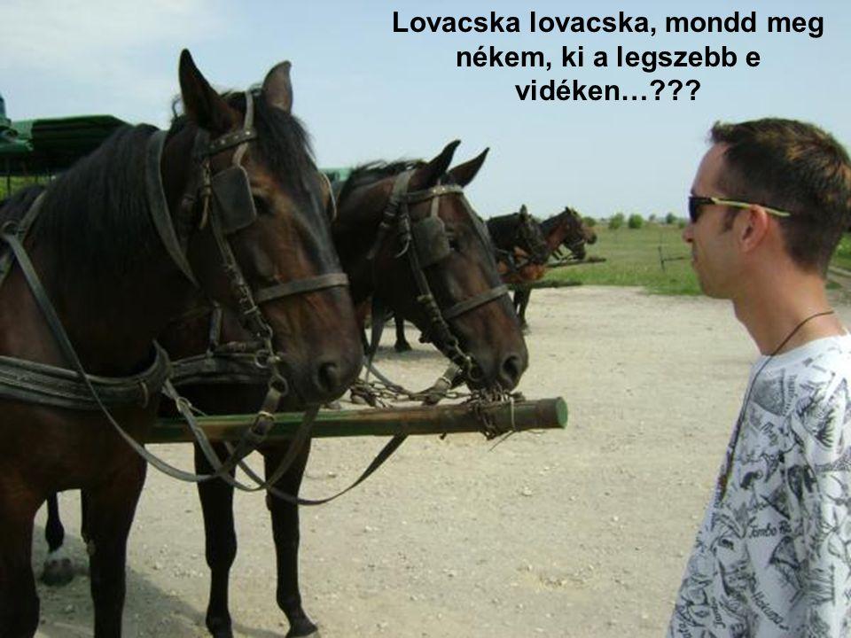 Lovacska lovacska, mondd meg nékem, ki a legszebb e vidéken…