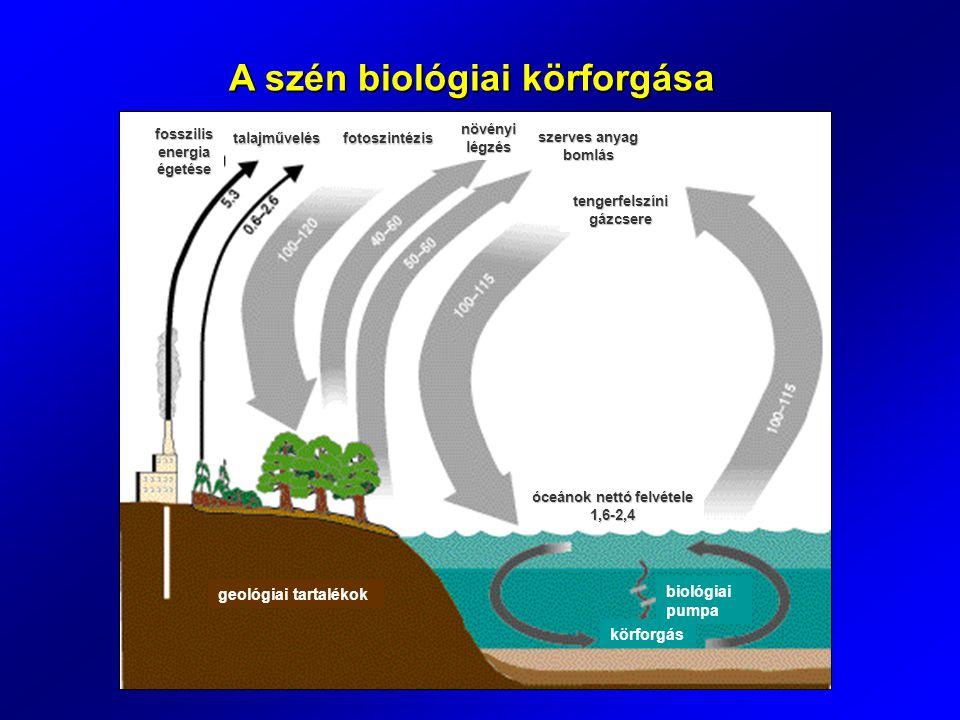 A szén biológiai körforgása geológiai tartalékok körforgás biológiai pumpa óceánok nettó felvétele 1,6-2,4 tengerfelszíni gázcsere szerves anyag bomlás növényi légzés fotoszintézistalajművelés fosszilis energia égetése