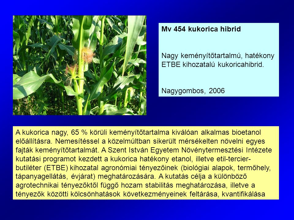 A kukorica nagy, 65 % körüli keményítőtartalma kiválóan alkalmas bioetanol előállításra.