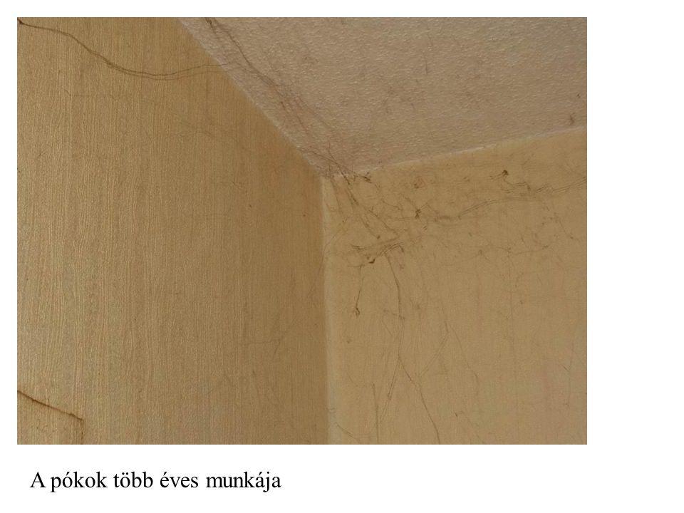 A pókok több éves munkája