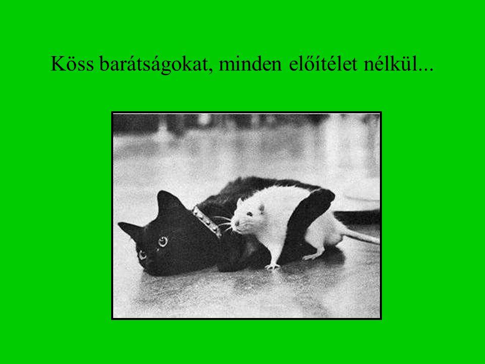 Köss barátságokat, minden előítélet nélkül...