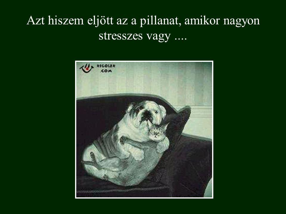 Azt hiszem eljött az a pillanat, amikor nagyon stresszes vagy....