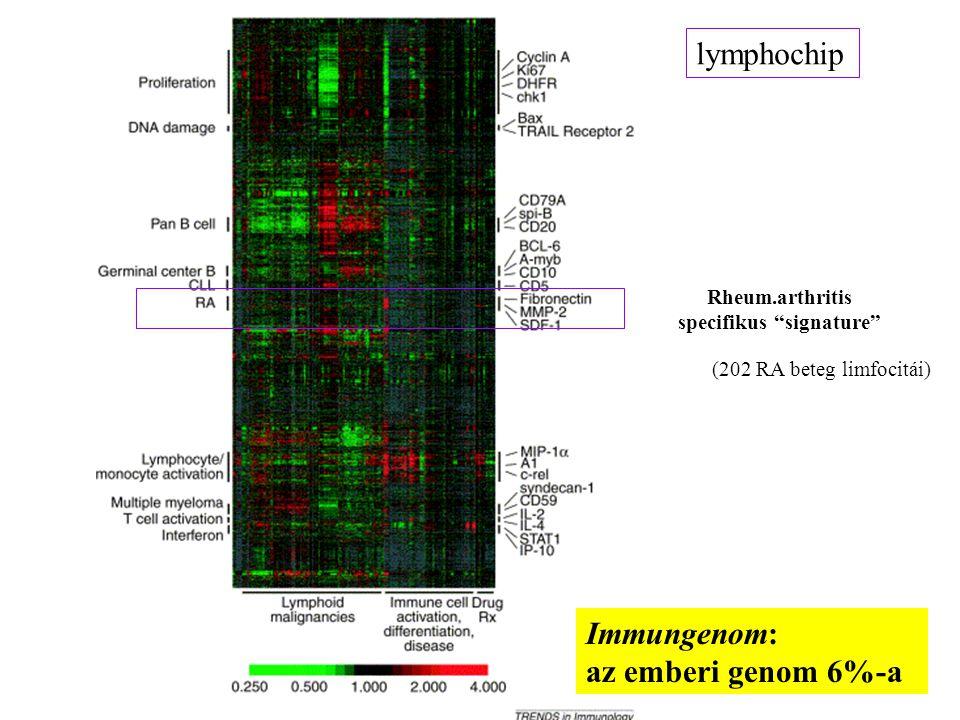 12 lymphochip Rheum.arthritis specifikus signature (202 RA beteg limfocitái) Immungenom: az emberi genom 6%-a