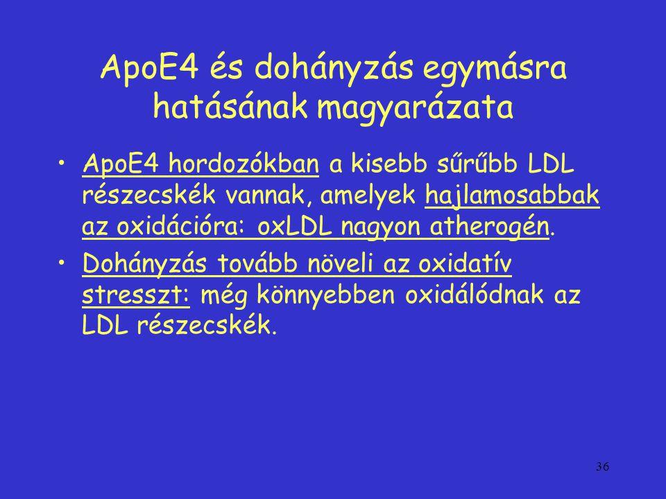 36 ApoE4 és dohányzás egymásra hatásának magyarázata ApoE4 hordozókban a kisebb sűrűbb LDL részecskék vannak, amelyek hajlamosabbak az oxidációra: oxLDL nagyon atherogén.