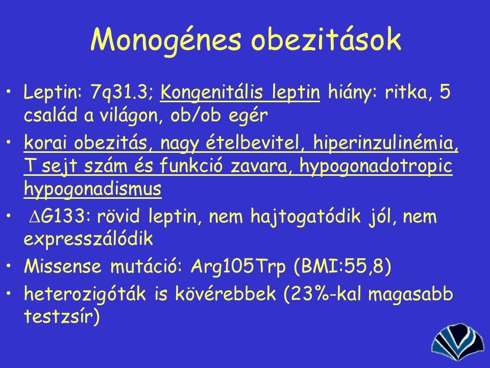 44 Monogénes obezitások Leptin: 7q31.3; Kongenitális leptin hiány: ritka, 5 család a világon, ob/ob egér korai obezitás, nagy ételbevitel, hiperinzulinémia, T sejt szám és funkció zavara, hypogonadotropic hypogonadismus  G133: rövid leptin, nem hajtogatódik jól, nem expresszálódik Missense mutáció: Arg105Trp (BMI:55,8) heterozigóták is kövérebbek (23%-kal magasabb testzsír)