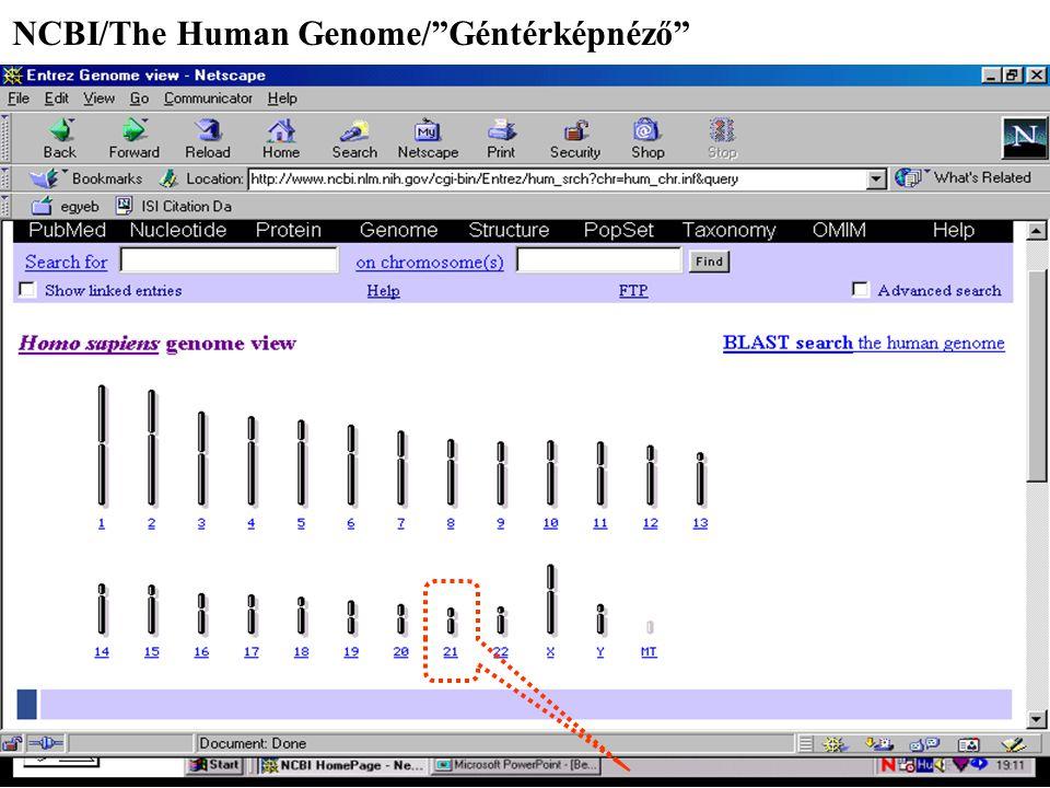 """NCBI/The Human Genome/""""Géntérképnéző"""""""