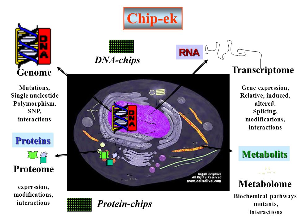 a o,.,,, ++ +- a o,.,,, ++ +- a o,.,,, ++ +- +- Chip-ek RNA Transcriptome Gene expression, Relative, induced, altered. Splicing, modifications, intera