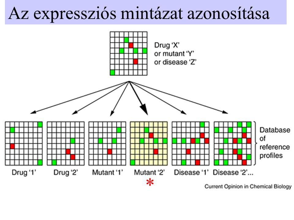 Az expressziós mintázat azonosítása *