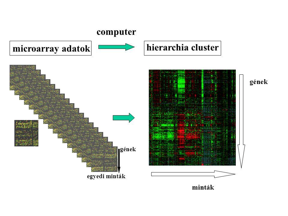 microarray adatok hierarchia cluster minták gének computer egyedi minták gének