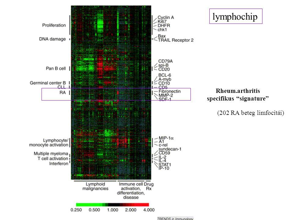 "lymphochip Rheum.arthritis specifikus ""signature"" (202 RA beteg limfocitái)"