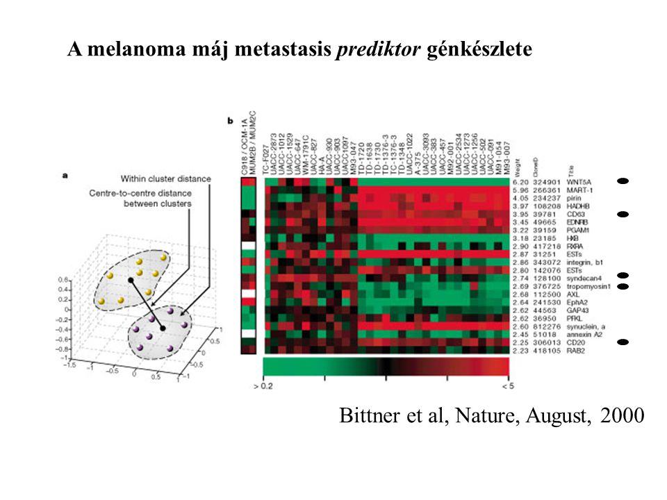 A melanoma máj metastasis prediktor génkészlete Bittner et al, Nature, August, 2000