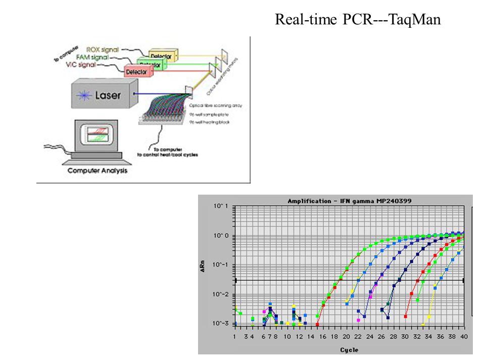 Real-time PCR---TaqMan