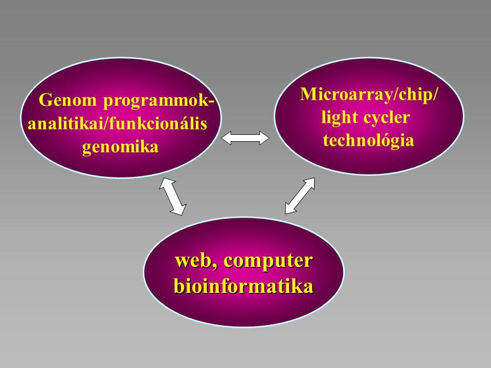 Genom programmok- analitikai/funkcionális genomika Microarray/chip/ light cycler technológia web, computer bioinformatika