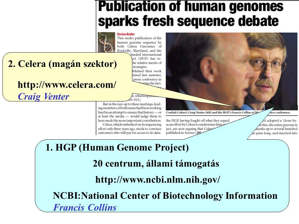 2. Celera (magán szektor) http://www.celera.com/ Craig Venter 1. HGP (Human Genome Project) 20 centrum, állami támogatás http://www.ncbi.nlm.nih.gov/