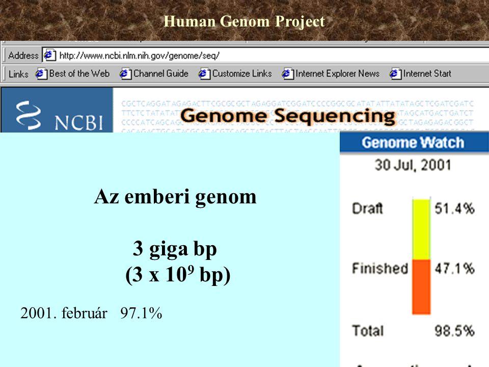 Az emberi genom 3 giga bp (3 x 10 9 bp) Human Genom Project 2001. február 97.1%
