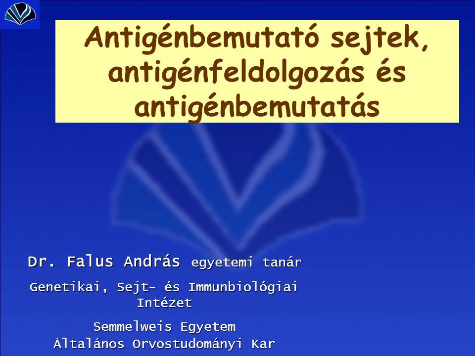 Endogén antigén feldolgozás Exogén antigén feldolgozás Patogén felvétele Sejten belül vanbekebelezéssel Degradáció proteoszómában lizoszómában Antigén-MHC komplex formálás Bemutatás: sejtfelszínen dER: TAP1-2 : antigénpeptideket az MHC I-hez kapcsolja Lizoszómális-endoszómális kompartment: invariáns  lánc - CLIP -HLA-DM: antigénpeptideket az MHC II-hez kapcsolja Magvas sejtekSpeciális antigénprezentáló sejtek (APC) Tc sejtekkelTh sejtekkel Felismerés