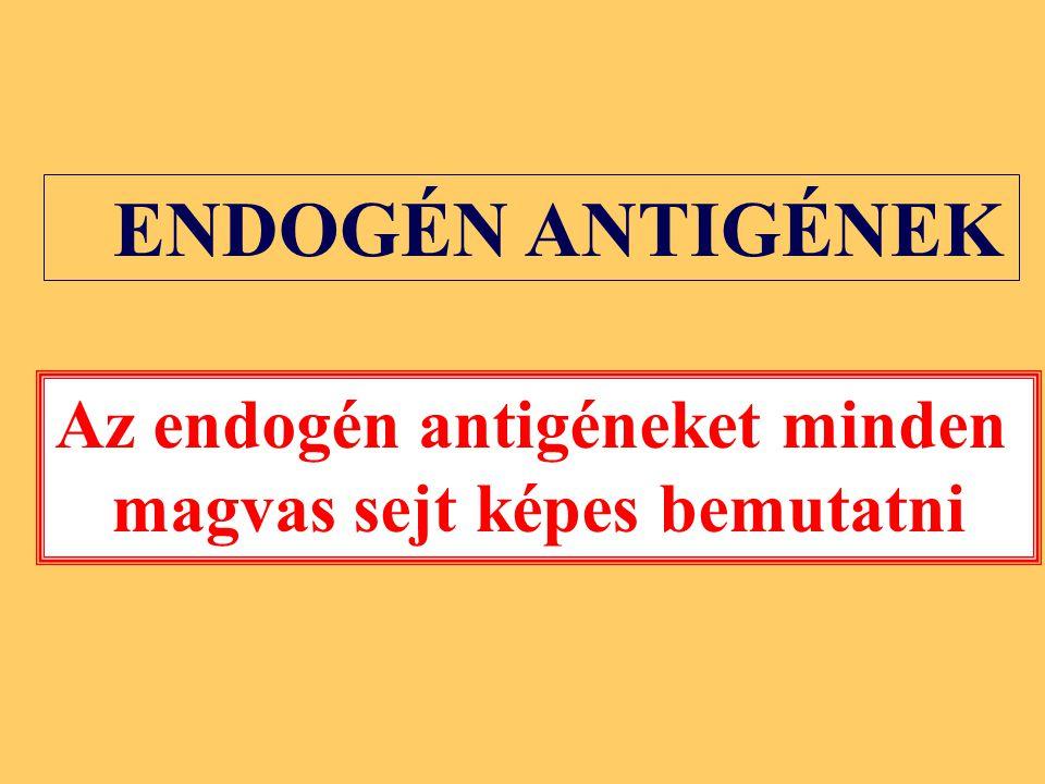 ENDOGÉN ANTIGÉNEK Az endogén antigéneket minden magvas sejt képes bemutatni
