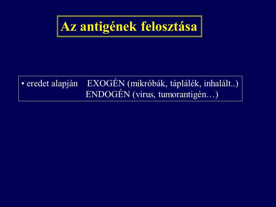 Az antigének felosztása eredet alapján EXOGÉN (mikróbák, táplálék, inhalált..) ENDOGÉN (virus, tumorantigén…)