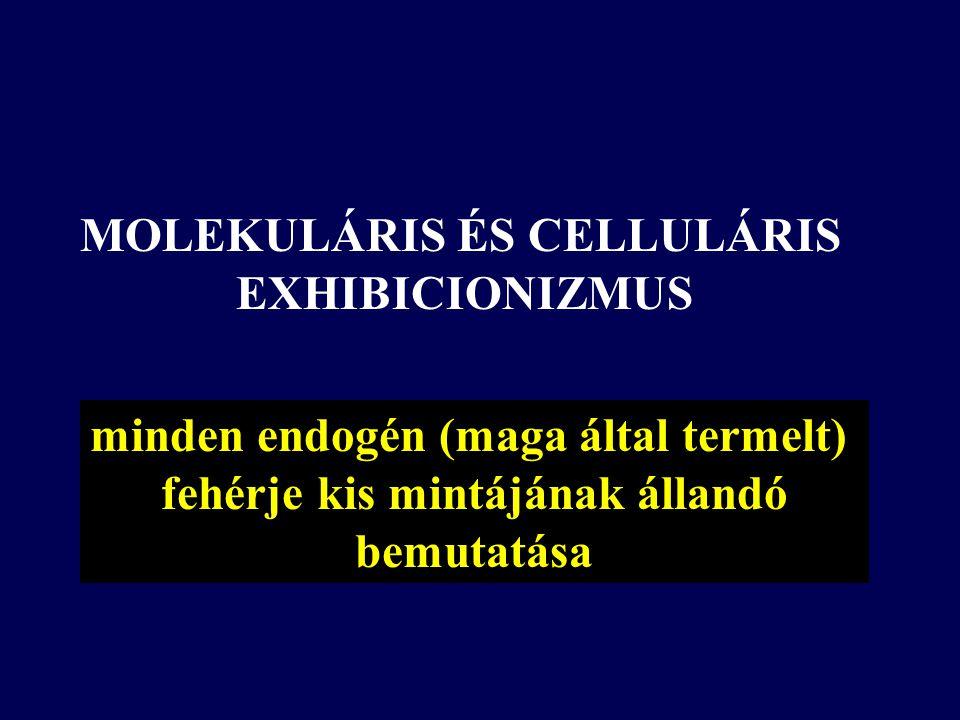 MOLEKULÁRIS ÉS CELLULÁRIS EXHIBICIONIZMUS minden endogén (maga által termelt) fehérje kis mintájának állandó bemutatása