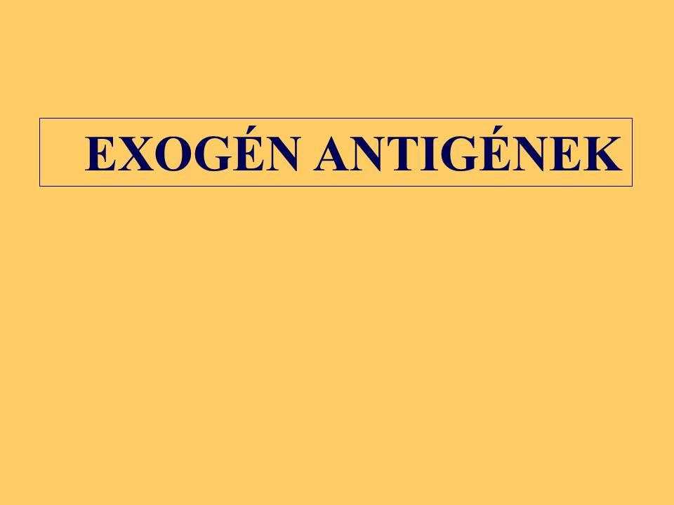 Bármely magvas sejt Professzionális antigénbemutató sejtek (dendritikus sejt, B sejt, makrofág) HLA-AHLA-C HLA-B HLA-A HLA-BHLA-C HLA-DP HLA-DQ HLA-DR