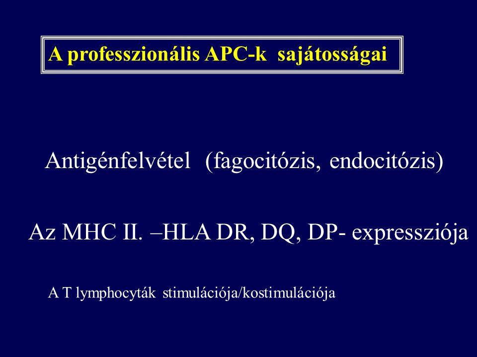 A professzionális APC-k sajátosságai Antigénfelvétel (fagocitózis, endocitózis) Az MHC II. –HLA DR, DQ, DP- expressziója A T lymphocyták stimulációja/
