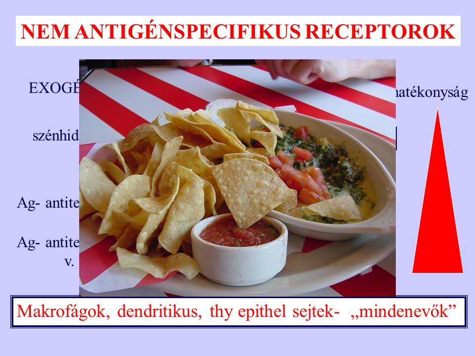 A biológiai lényeg: /antigén/peptid kötés—antigénprezentáció EZT AZ MHC/PEPTID KOMPLEXET ISMERI FEL A T SEJT