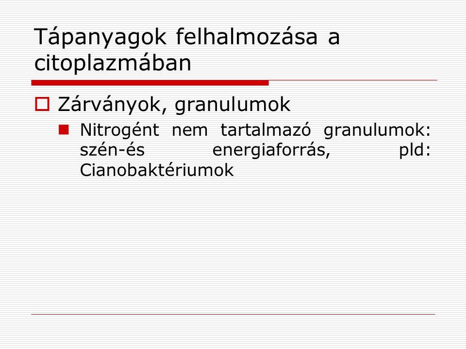 Tápanyagok felhalmozása a citoplazmában  Zárványok, granulumok Nitrogént nem tartalmazó granulumok: szén-és energiaforrás, pld: Cianobaktériumok