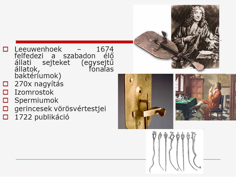  Leeuwenhoek – 1674 felfedezi a szabadon élő állati sejteket (egysejtű állatok, fonalas baktériumok)  270x nagyítás  Izomrostok  Spermiumok  geri