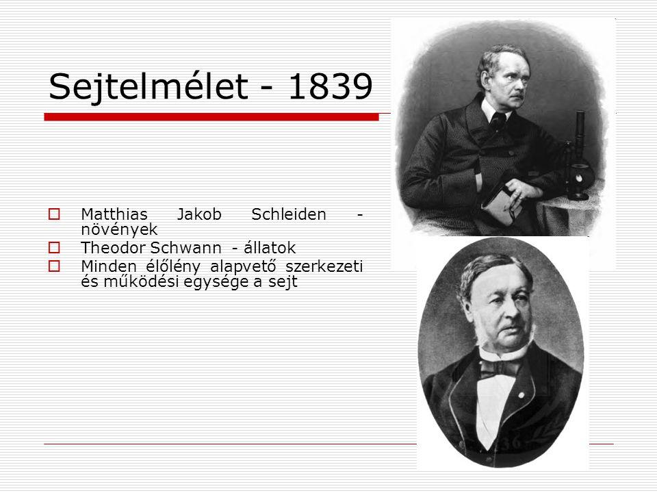  Rudolf Virchow  Új sejtek már meglévő sejtek osztódásából jönnek létre (1885) (Omnis cellula e cellula)  Szövetfejlődés alapjai  Egy szervezet valamennyi sejtje egyetlen megtermékenyített sejtből származik.
