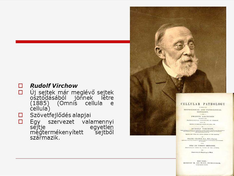  Rudolf Virchow  Új sejtek már meglévő sejtek osztódásából jönnek létre (1885) (Omnis cellula e cellula)  Szövetfejlődés alapjai  Egy szervezet va