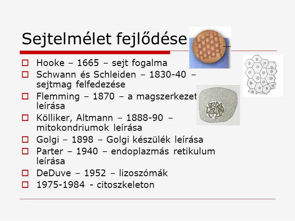 Sejtelmélet fejlődése  Hooke – 1665 – sejt fogalma  Schwann és Schleiden – 1830-40 – sejtmag felfedezése  Flemming – 1870 – a magszerkezet leírása