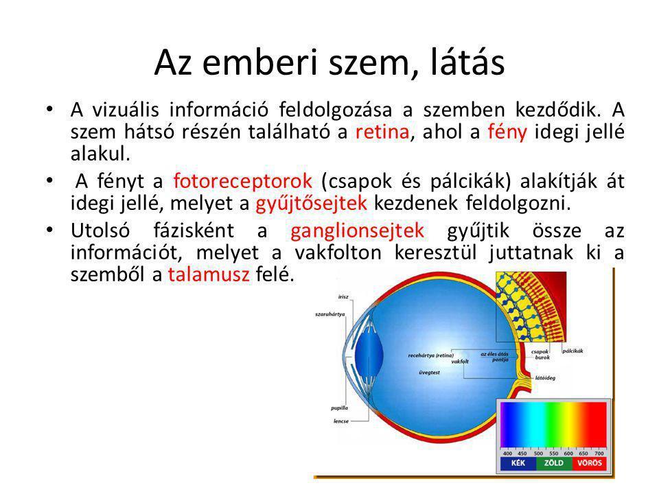 Az emberi szem, látás A vizuális információ feldolgozása a szemben kezdődik. A szem hátsó részén található a retina, ahol a fény idegi jellé alakul. A