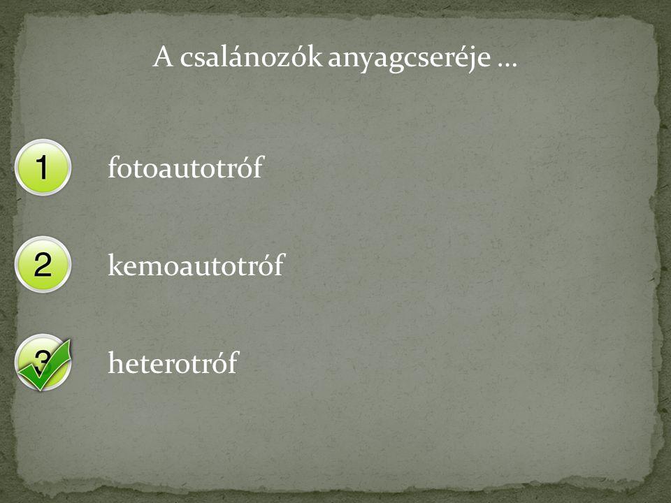 A csalánozók anyagcseréje … fotoautotróf kemoautotróf heterotróf