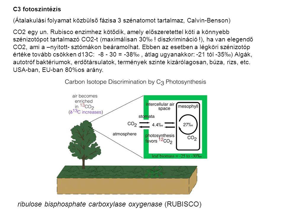 C3 fotoszintézis (Átalakulási folyamat közbülső fázisa 3 szénatomot tartalmaz, Calvin-Benson) CO2 egy un. Rubisco enzimhez kötődik, amely előszeretett