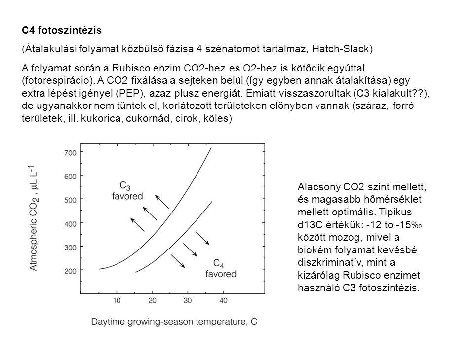C4 fotoszintézis (Átalakulási folyamat közbülső fázisa 4 szénatomot tartalmaz, Hatch-Slack) A folyamat során a Rubisco enzim CO2-hez es O2-hez is kötő