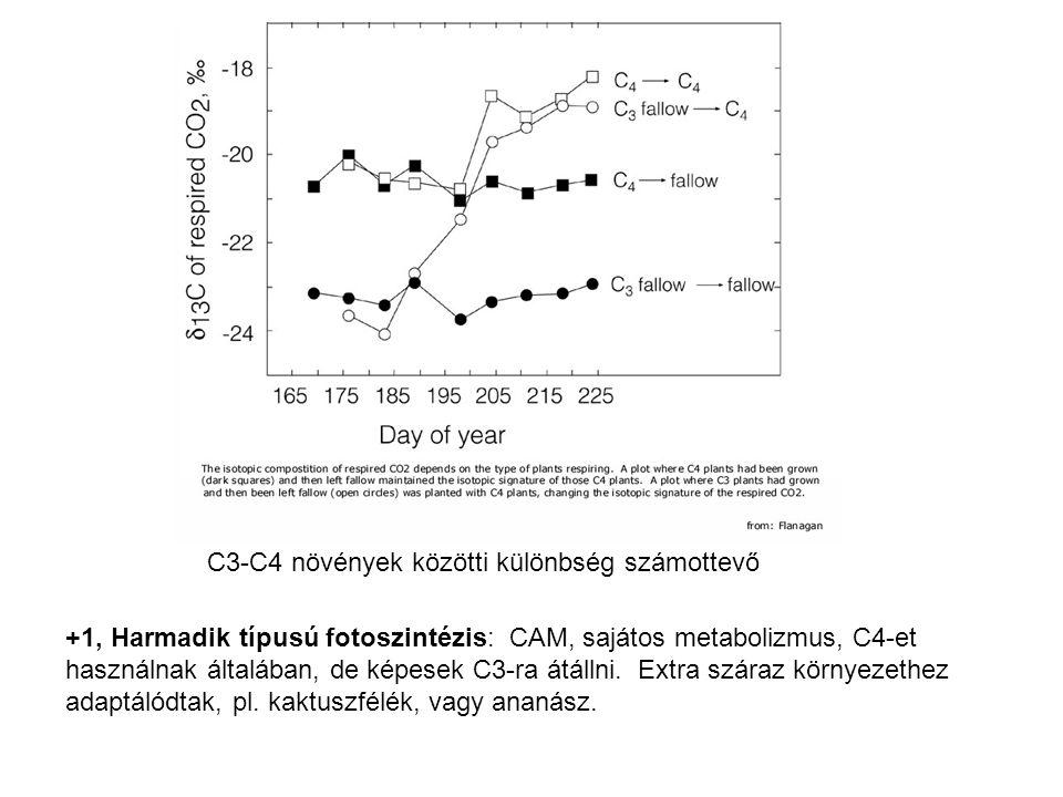 C3-C4 növények közötti különbség számottevő +1, Harmadik típusú fotoszintézis: CAM, sajátos metabolizmus, C4-et használnak általában, de képesek C3-ra