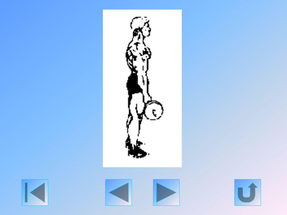 Ezt a gyakorlatot tekintik általában a legjobb bicepszfejlesztő gyakorlatnak; bármely más edzésmódszernél több 50 cm széles bicepsz kifejlesztéséhez j