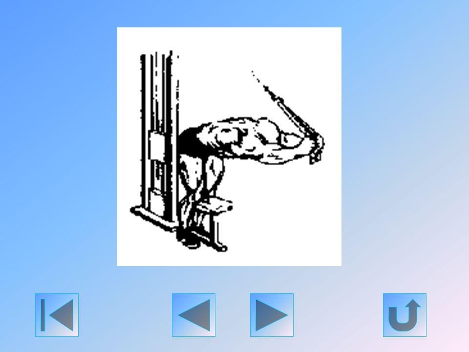 Vegyen fel döntött törzsű, jól kiegyensúlyozott helyzetet, s fogja meg a hátizom-gépre erősített egyenes tricepsz - rudat. Felsőkarjai állandó helyzet