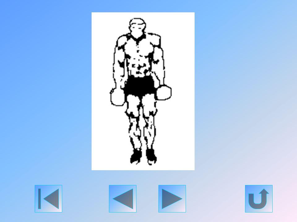 Vállszélességű fogással fogjon meg egy kétkaros súlyzót. Álljon egyenes tartással. A súlyzót tetszés szerint tarthatja a teste előtt és mögött is, és