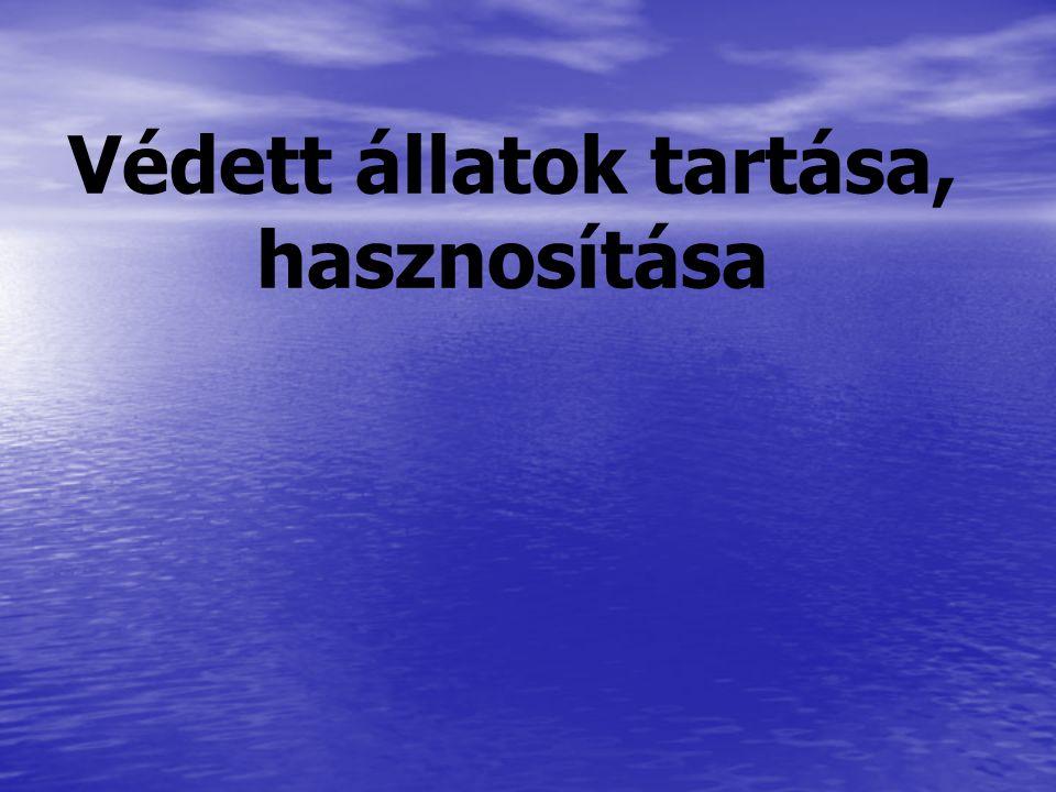 348/2006.(XII. 23.) Korm.