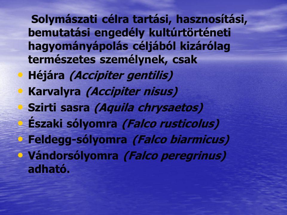 Solymászati célra tartási, hasznosítási, bemutatási engedély kultúrtörténeti hagyományápolás céljából kizárólag természetes személynek, csak Héjára (A